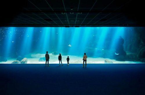Самый большой аквариум в Европе