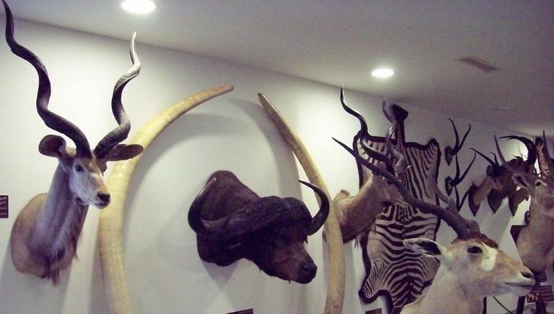Музей охоты