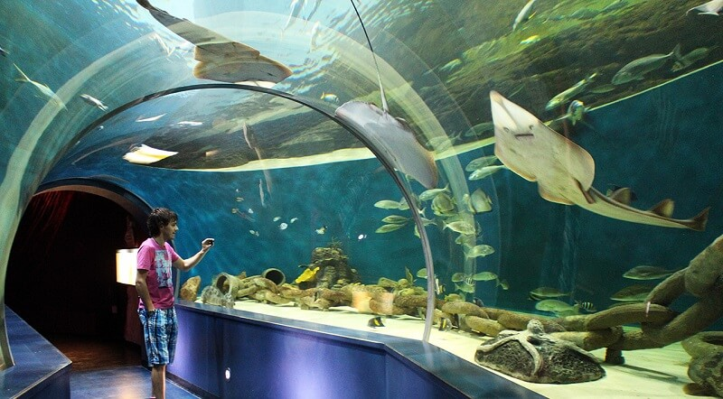 Шарджа, выставка рыб