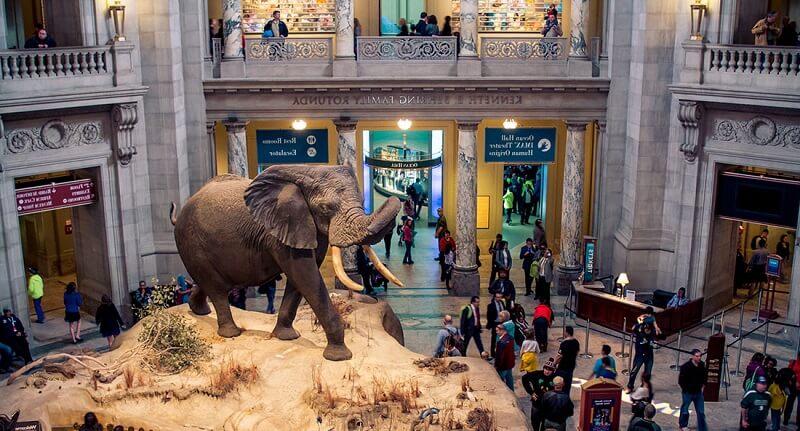 Музей естественной истории в Шардже