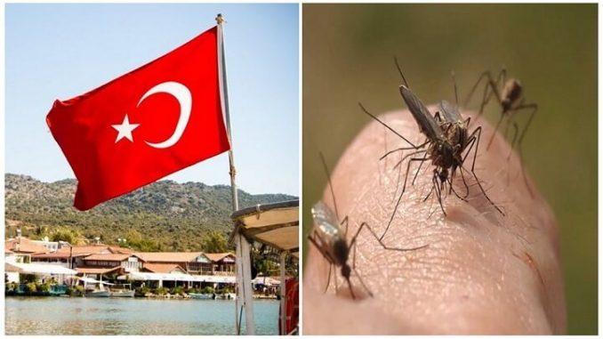 Комары в Турции